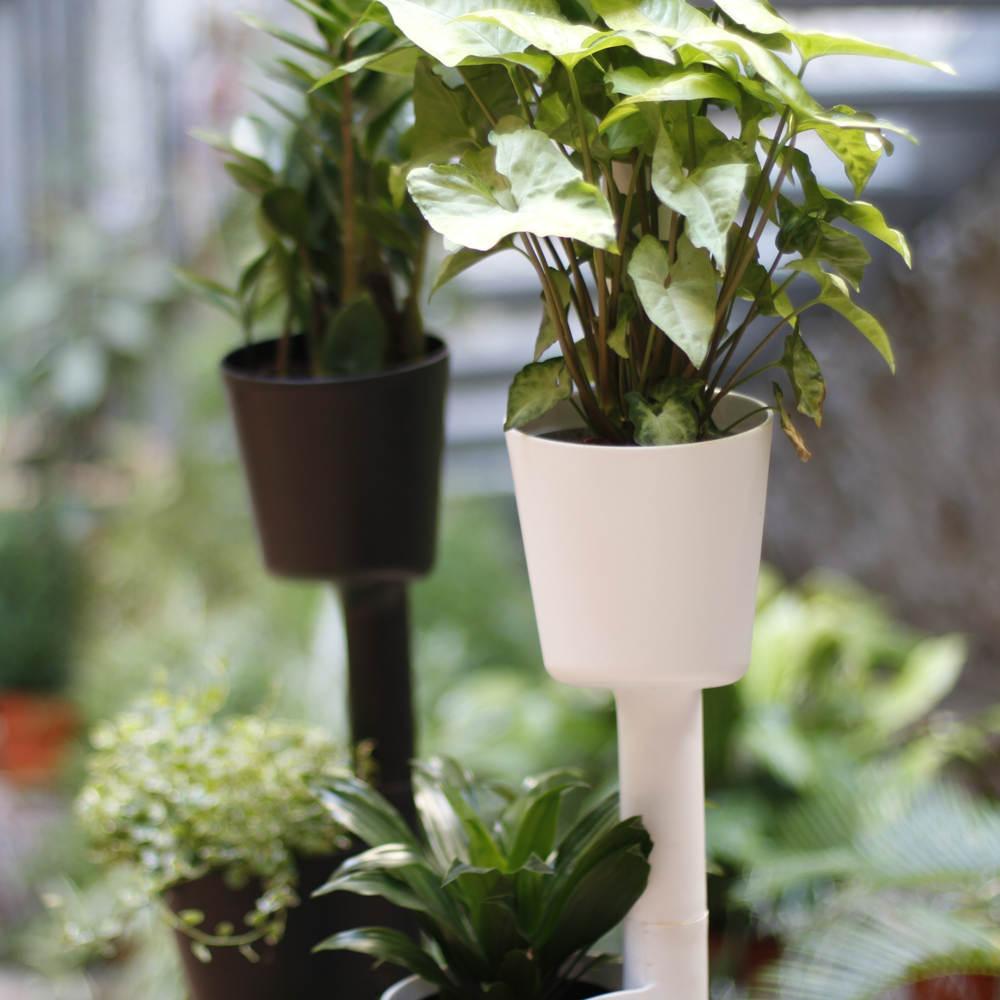 Plantas purificadoras aire