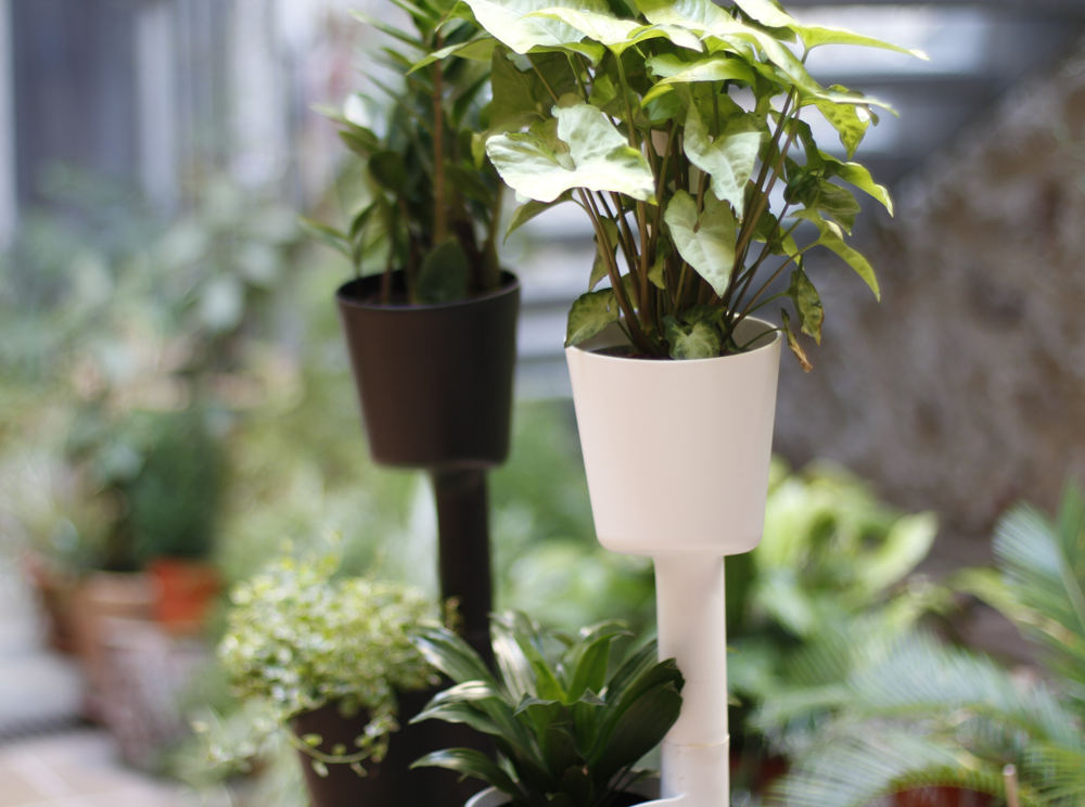 self-watering system to water plants in summer