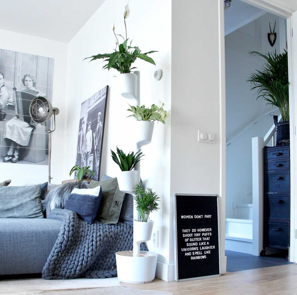 air purifying plants at home