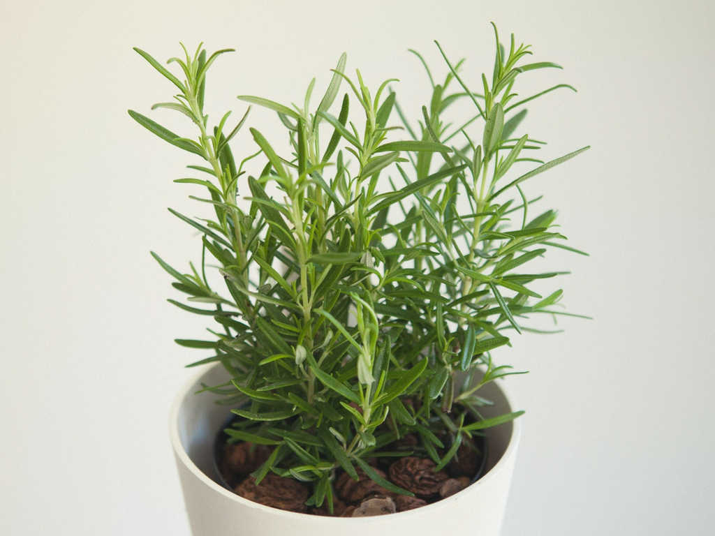 huerto urbano plantas aromáticas