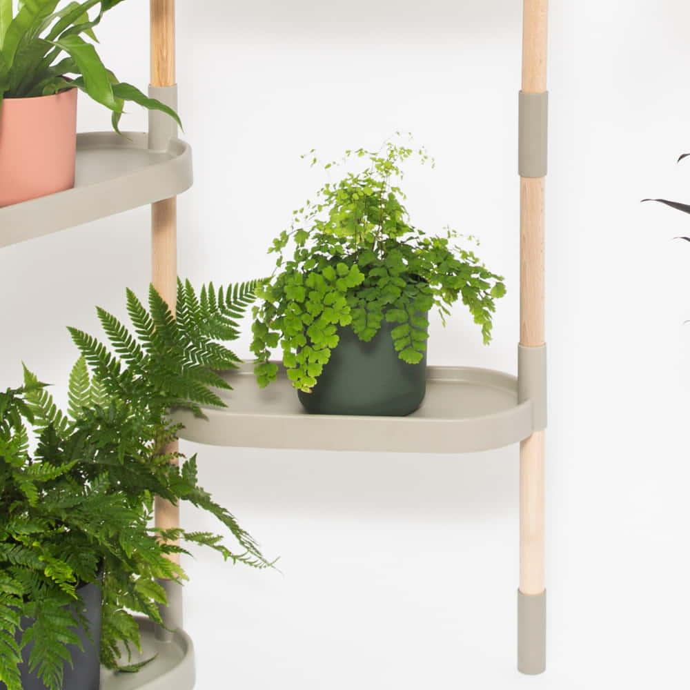 dim indoor plants