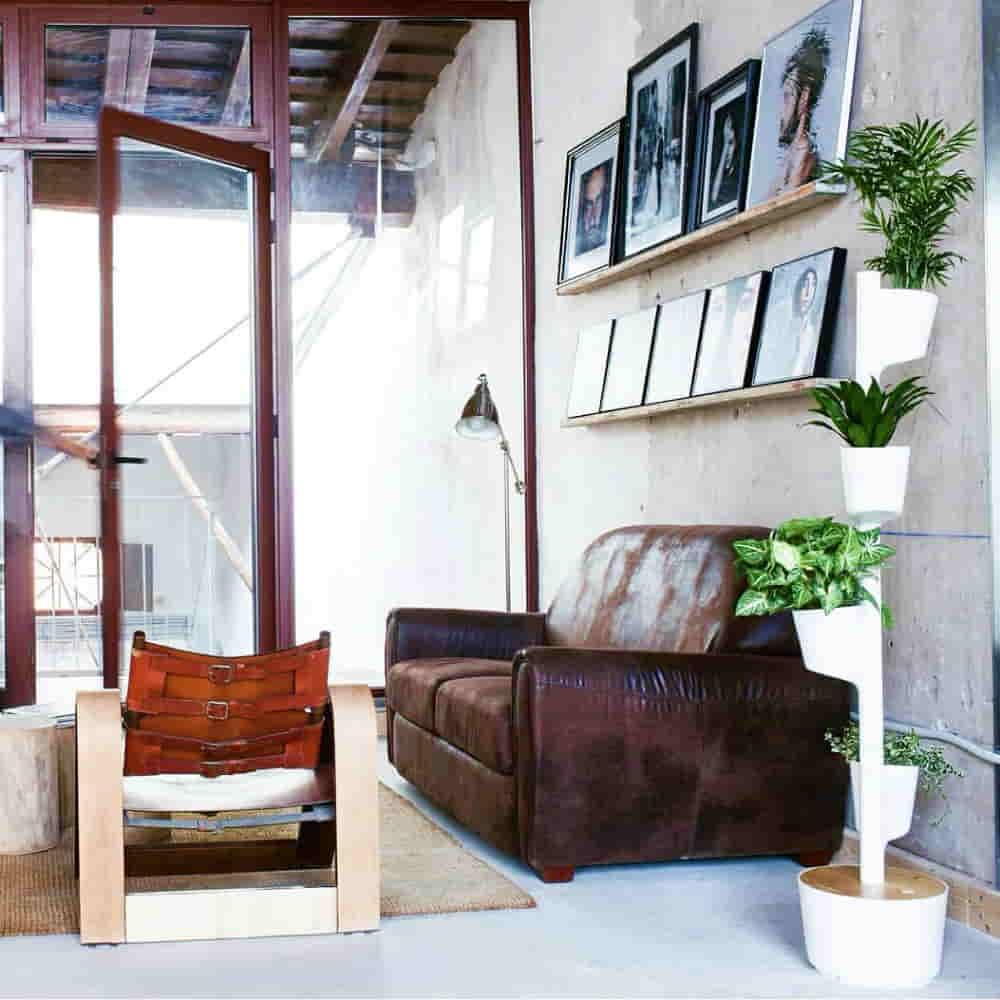 decoración sostenible con plantas