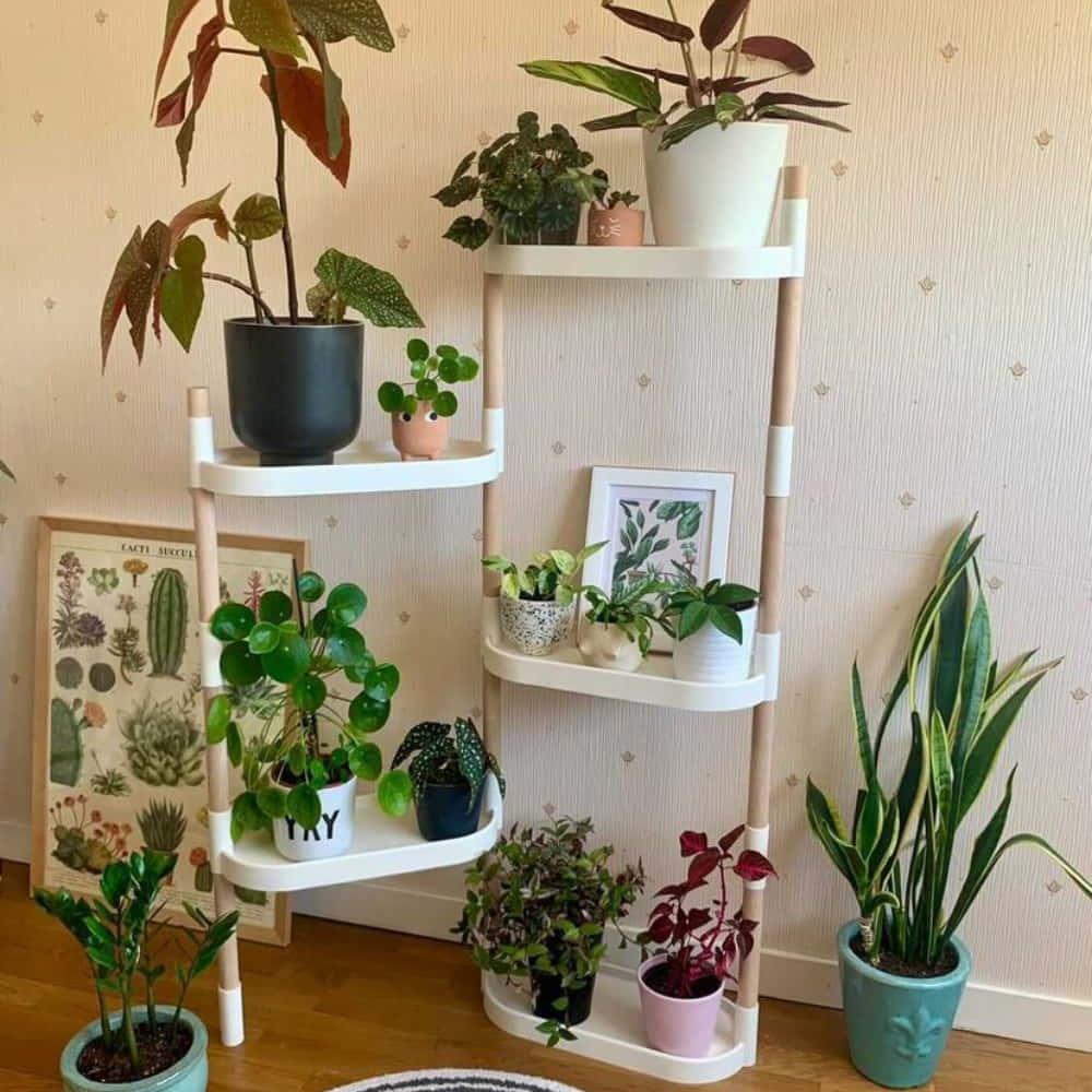 modular plant shelves