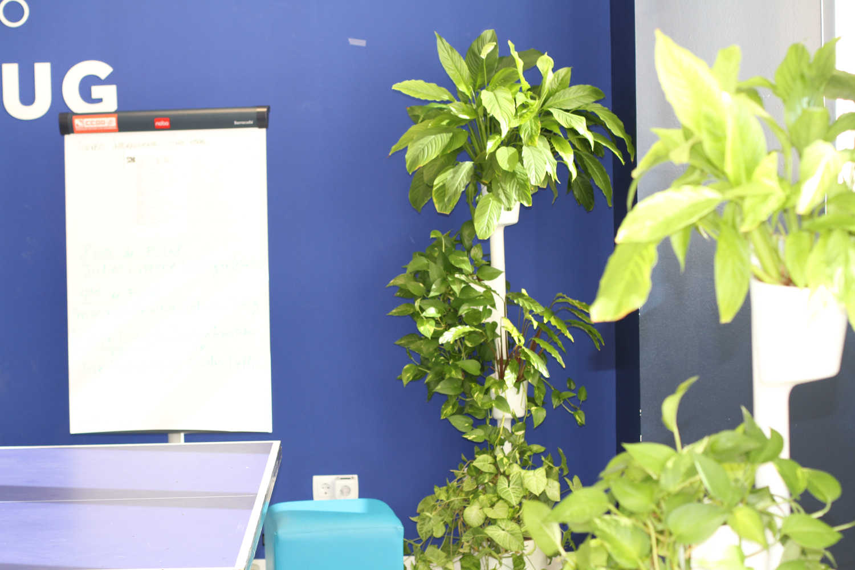 plantas en oficina eDreams