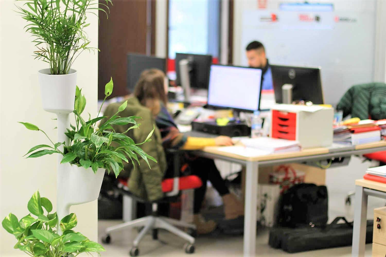 Plantas en oficinas de esquiades.com