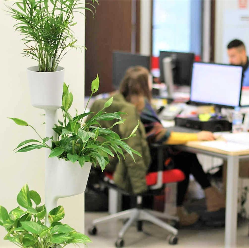 Plantas hidropónicas en la oficina