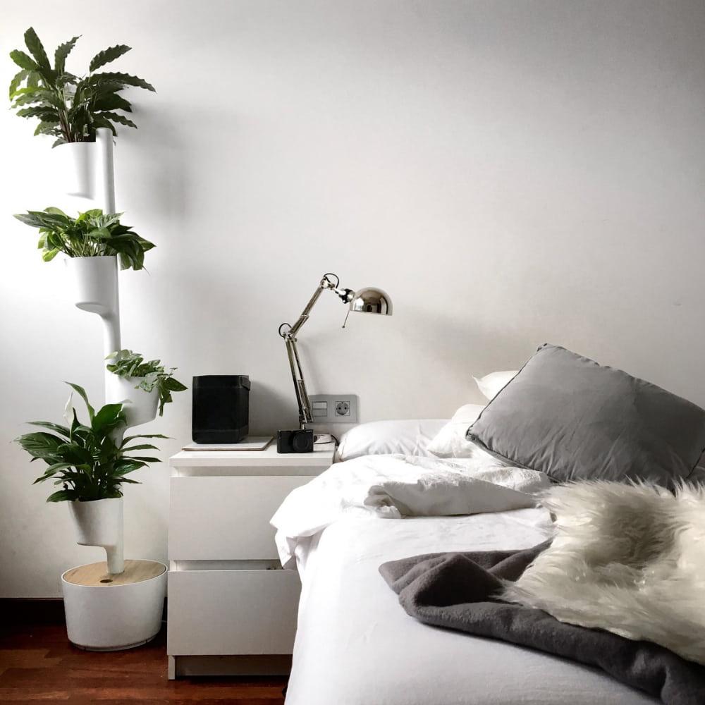 plants subscription