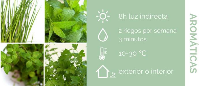 características de las plantas aromáticas