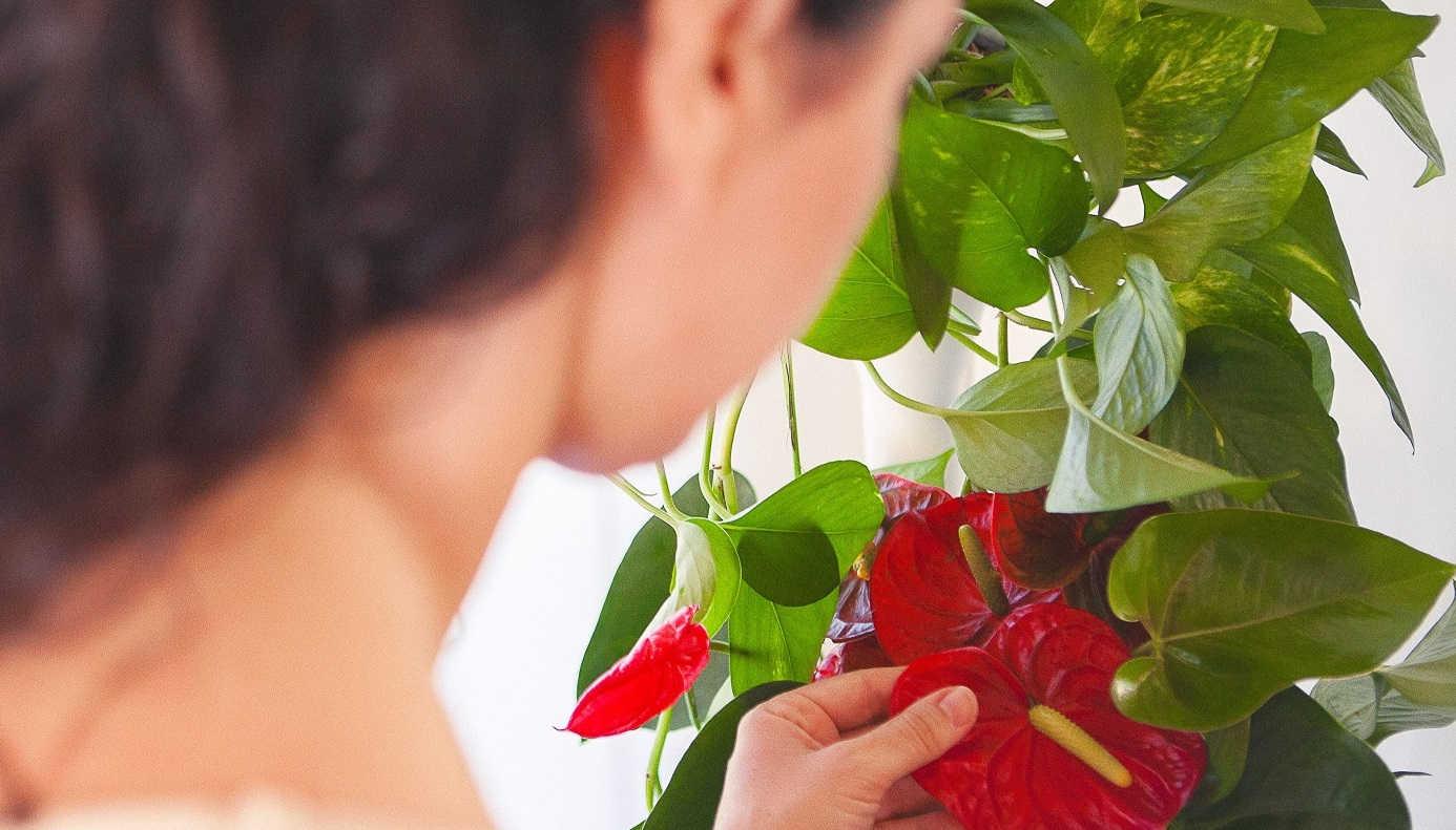 soporte macetas plantas en vertical
