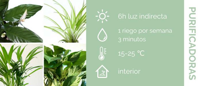 características plantas purificadoras del aire