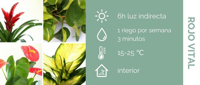 cuidado plantas con flores